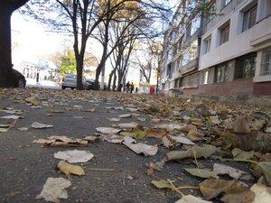 frunze cazute toamna