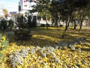 frunze cazute toamna Braila