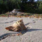 toamna imagini frunza
