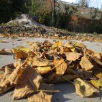 fotografie toamna frunze aramii