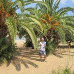 oaza cu palmieri