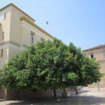 tree of nafplio